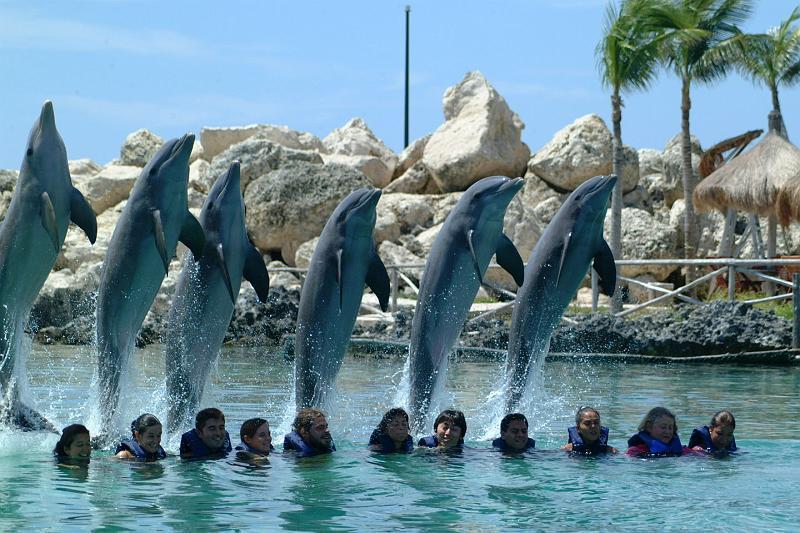 Xcaret delfines